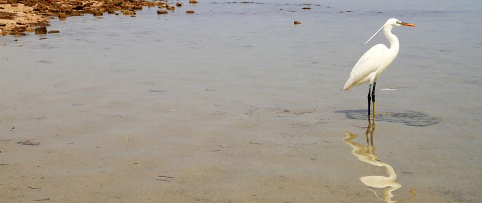 birdwatching-lakeburullus