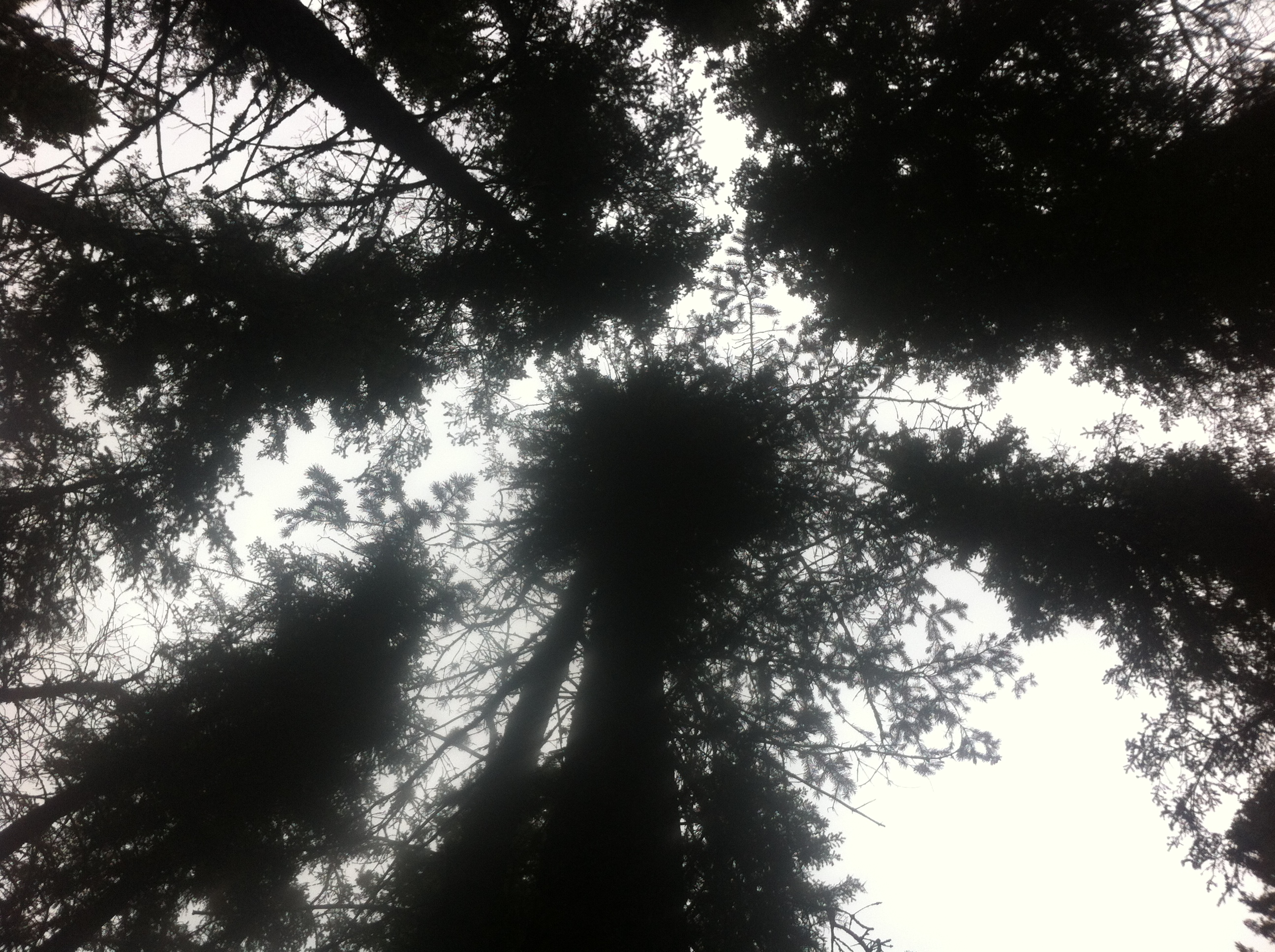 A thick canopy