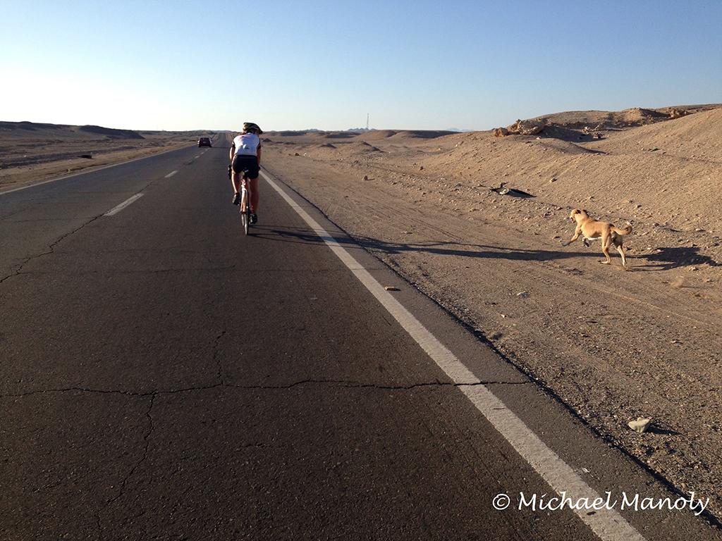 The running hound